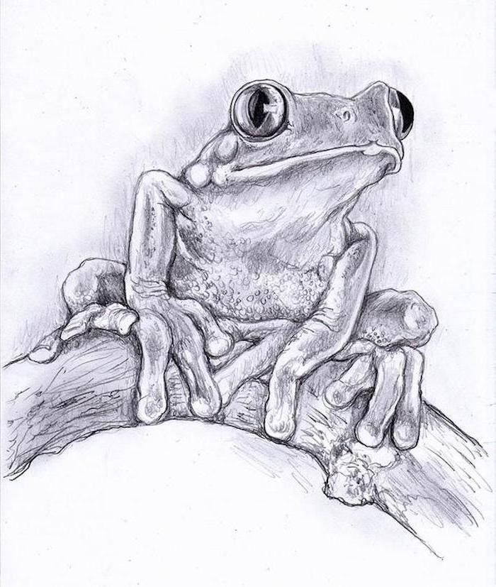 frog standing on tree branch how to draw animals step by step black pencil drawing on white background