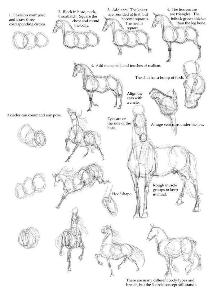 how to draw a horse with explanations easy animal sketches step by step diy tutorial black pencil sketch on white background