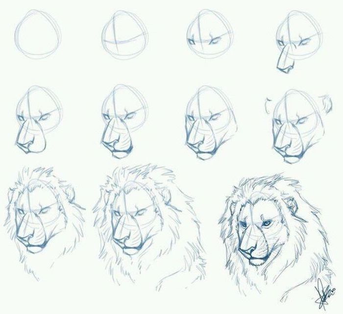 how to draw a lion in eleven steps step by step drawing animals pencil sketch on white background