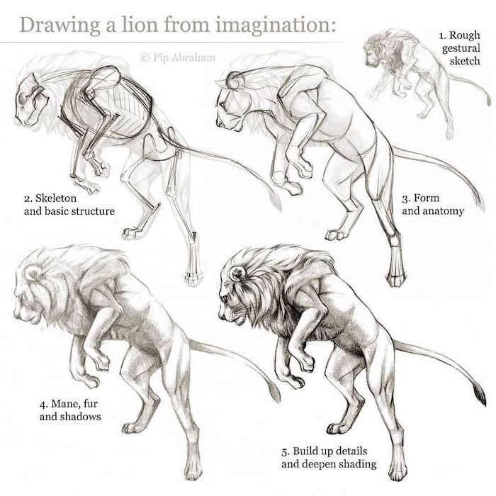 how to draw a lion step by step diy tutorial how to draw animals black pencil sketch on white background