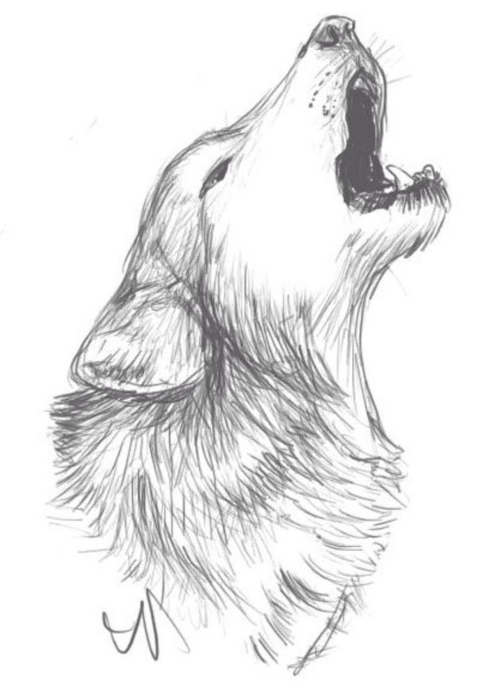how to draw animals easy howling wolf only head drawn black pencil drawing on white background