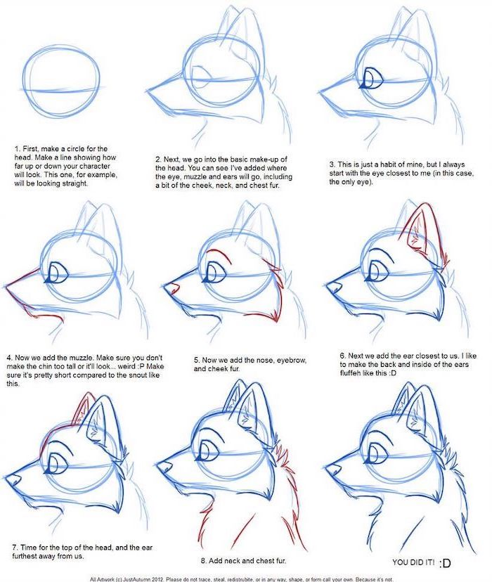 how to draw the head of a dog in nine steps with explanations cute animal drawings easy white background
