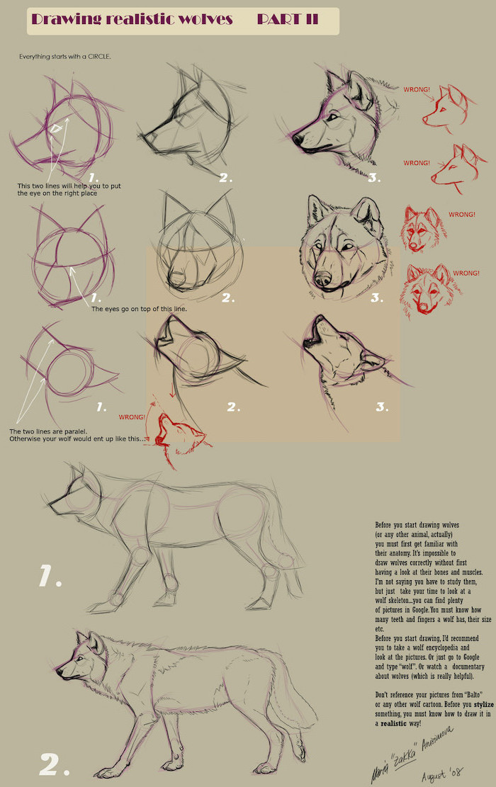 how to draw wolves from different angles realistic animal drawings step by step diy tutorials