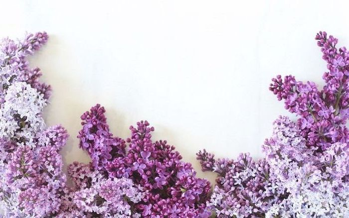 lilac in different shades of purple on the bottom of white background aesthetic computer wallpaper