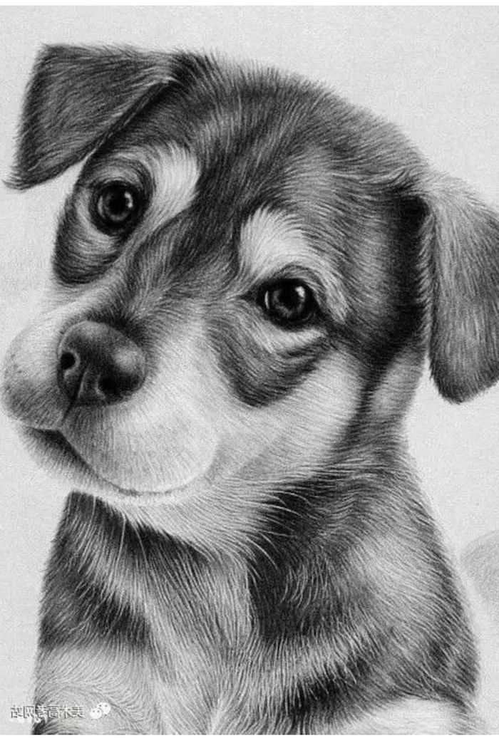 puppy drawn with black and white pencils easy animals to draw black and white pencil sketch realistic drawing