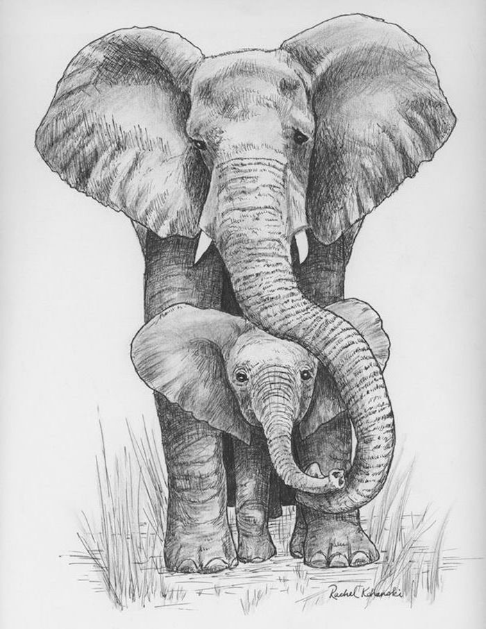 realistic animal drawings big elephant with baby elephant walking black and white pencil drawing on white background