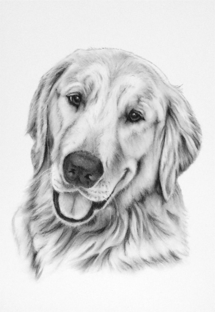 realistic pencil drawing of dog head how to draw animals drawn on white background