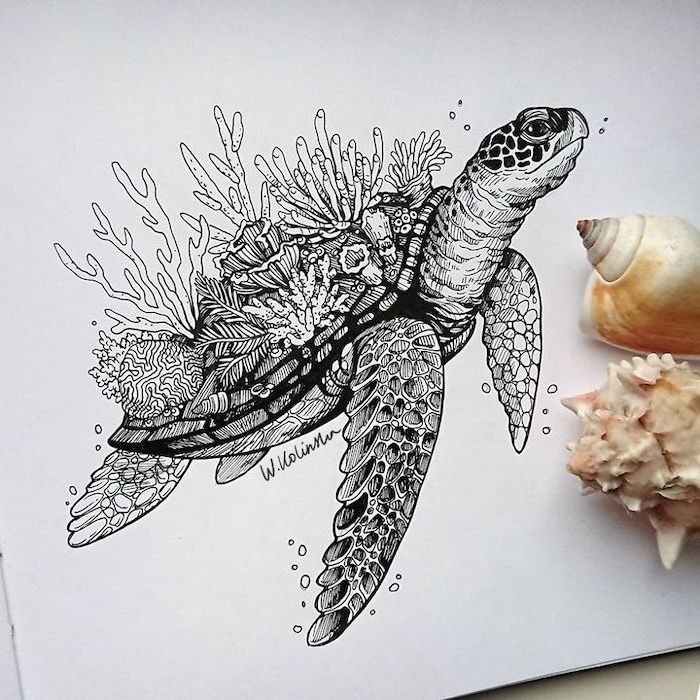 simple animal drawings drawing of a tortoise with seaweed covered shell black pencil drawing on white background