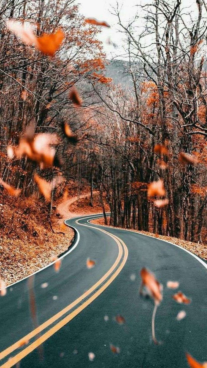 autumn wallpaper iphone road going through a forest surrounded by trees with no leaves orange leaves on the ground