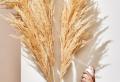 Pampas Grass Decor Ideas For a Lush, Boho Interior