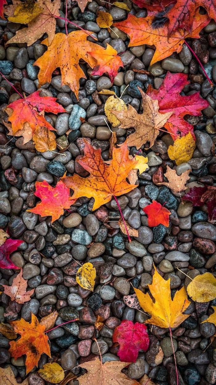 brown orange yellow red leaves covered with raindrops on top of rocks autumn wallpaper iphone