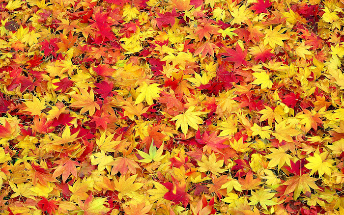 close up photo of leaves fallen to the ground fall desktop backgrounds yellow orange and red leaves