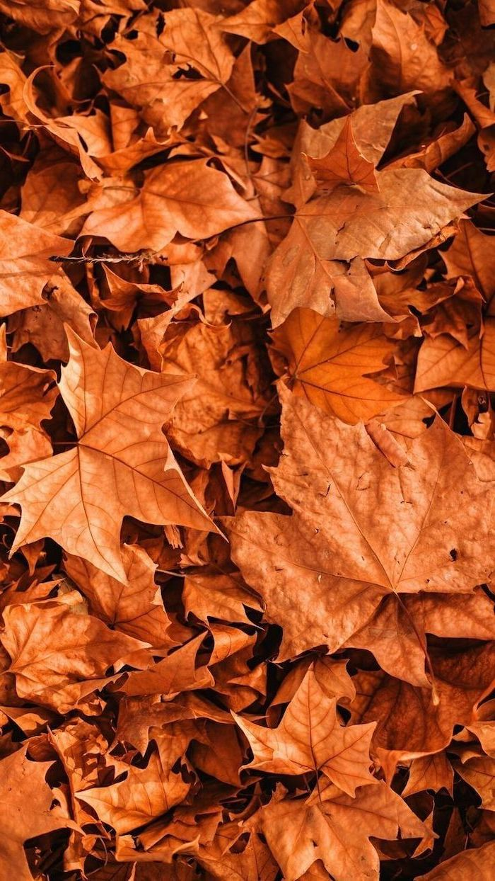 close up photo of lots of dried orange leaves on the ground autumn desktop wallpaper
