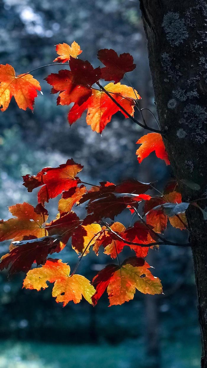 close up photo of tree branch with orange leaves aesthetic fall wallpaper dark blurred background