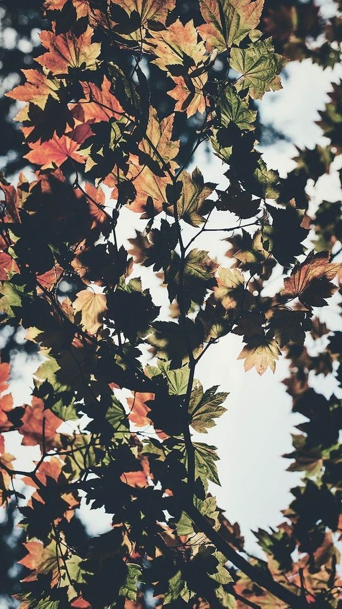 cute fall backgrounds close up photo of tree branch with leaves in orange and green sun shining above them