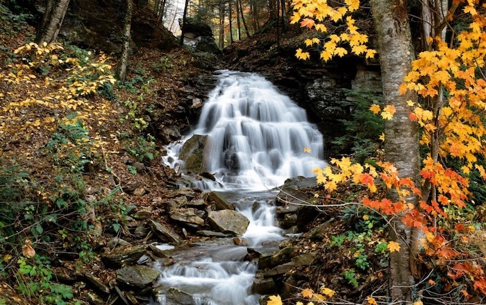 forest landscape cute fall wallpaper small waterfall surrounded by trees with yellow and orange leaves
