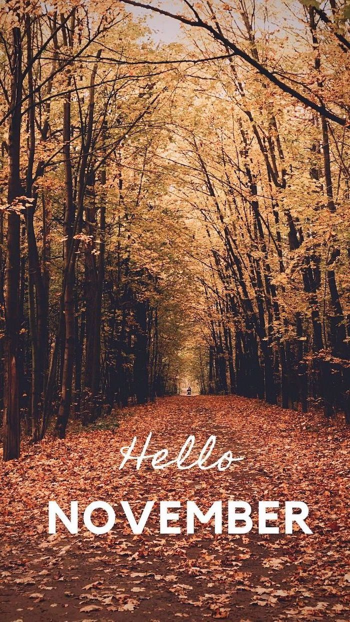 hello november written with white font autumn desktop wallpaper pathway covered with leaves surrounded by tall trees with yellow leaves