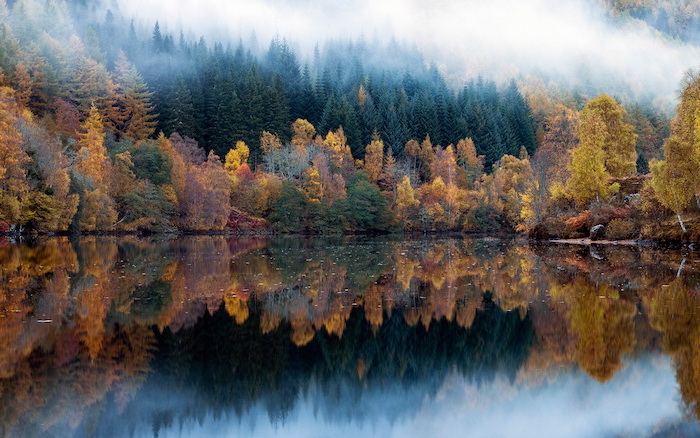 lake surrounded by trees with green orange yellow leaves surrounded by fog fall desktop backgrounds