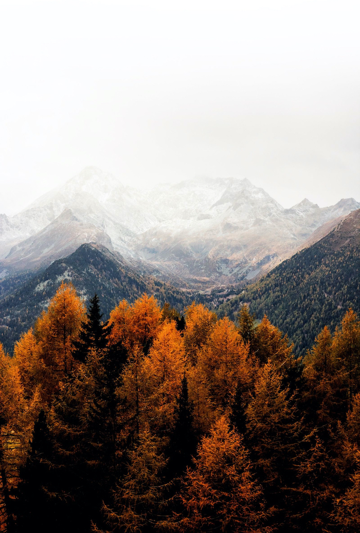 mountain range covered with fog autumn desktop wallpaper tall trees with orange leaves at the forefront