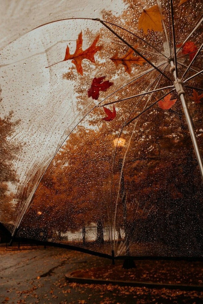 photo taken from under umbrella covered with raindrops cute fall wallpaper iphone orange leaves on top
