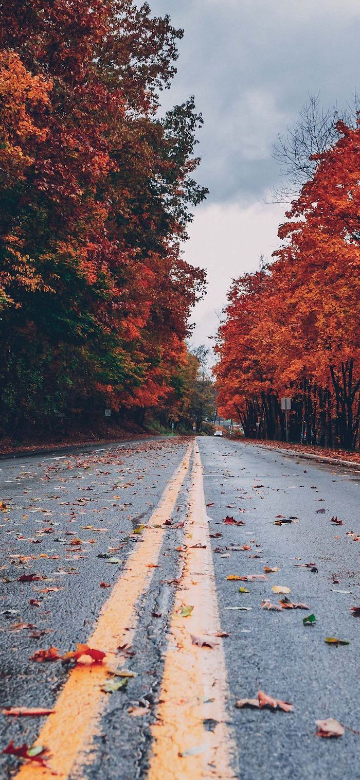 road covered with fallen leaves cute fall backgrounds surrounded by tall trees with orange yellow leaves