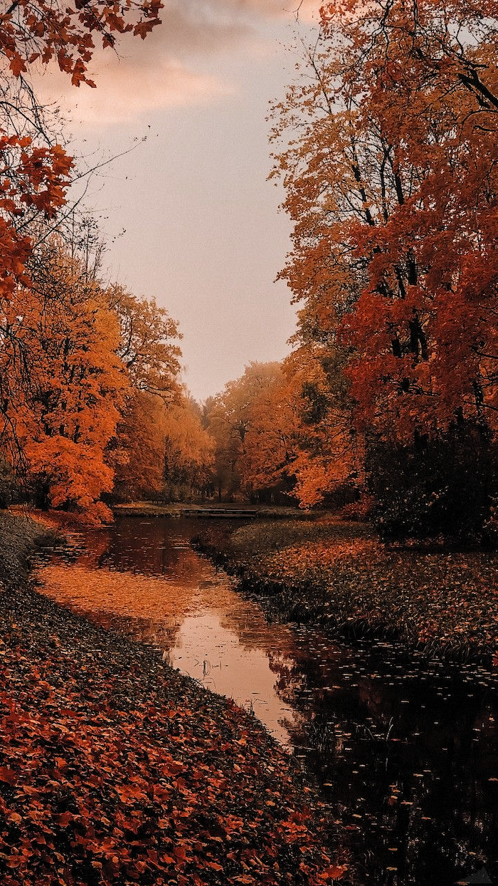 small river covered with orange fall leaves autumn wallpaper iphone surrounded by tall trees with orange yellow leaves