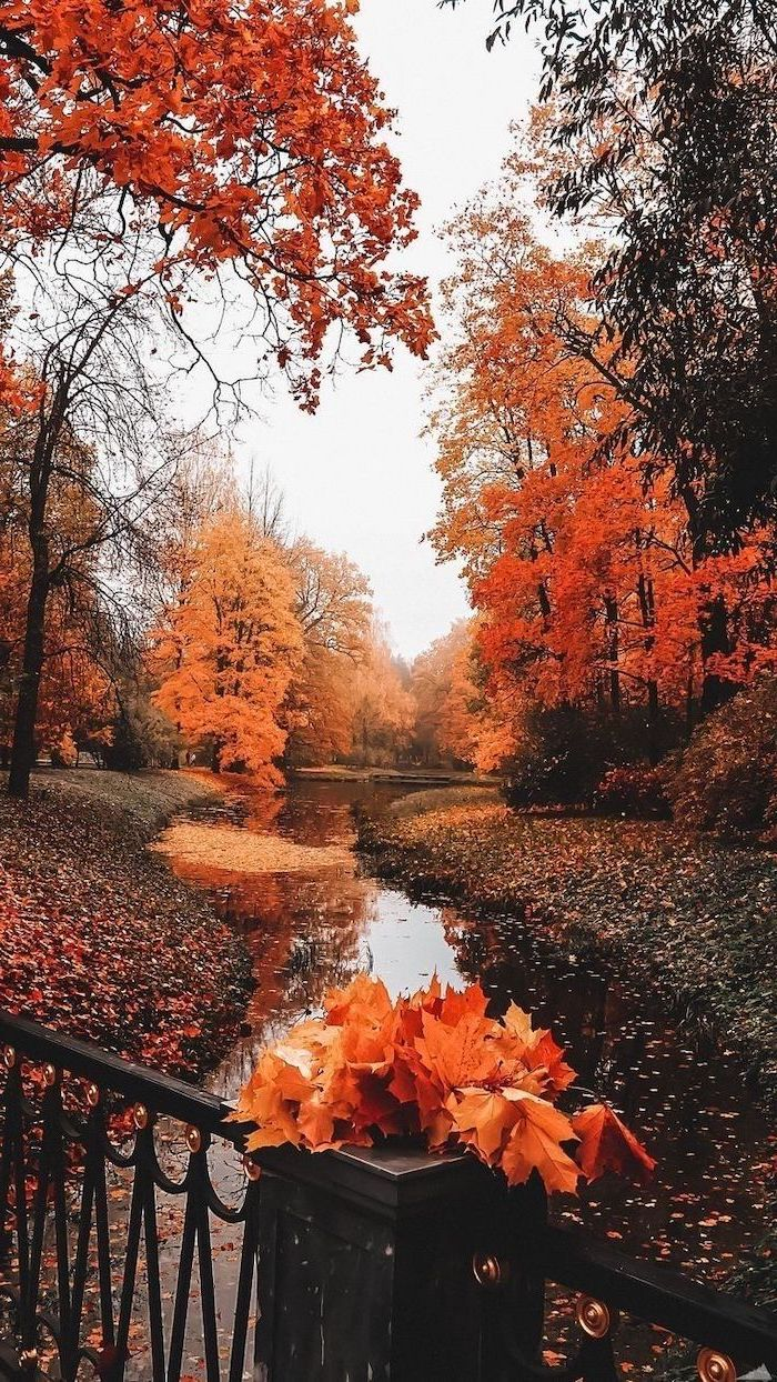 small river surrounded by tall trees with orange yellow leaves aesthetic fall wallpaper small bridge over it