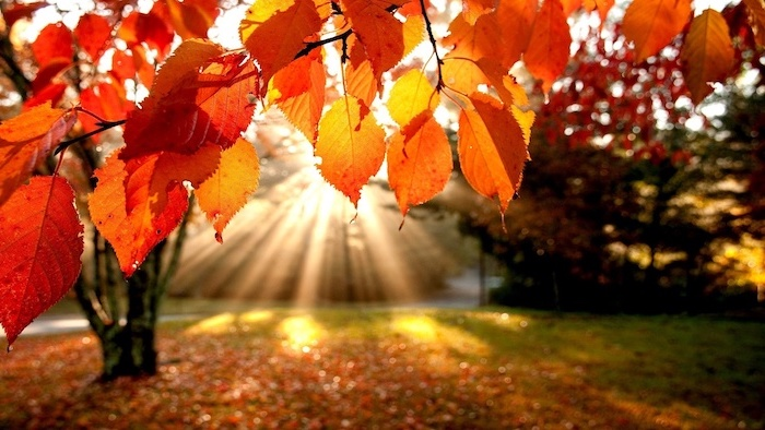 sun shining through the trees onto a field with orange leaves cute fall wallpaper surrounded by trees