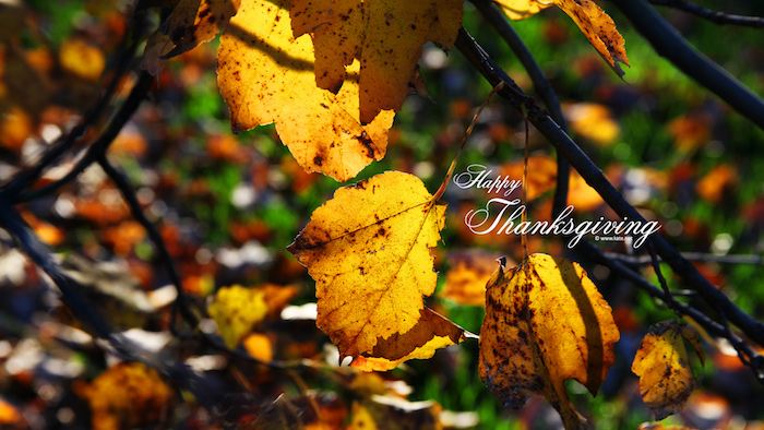 close up photo of branches with dried leaves in yellow and orange thanksgiving desktop wallpaper happy thanksgiving written in white cursive