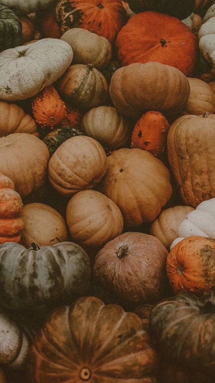 lots of pumpkins in different shapes colors and sizes arranged together cute thanksgiving backgrounds