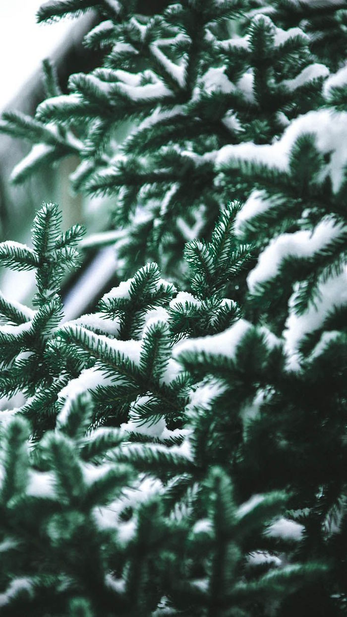 close up photo of green christmas tree covered with snow christmas desktop wallpaper