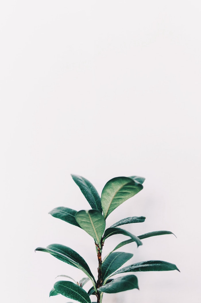 green leaves of small potted palm minimalist phone wallpaper photographed on white background