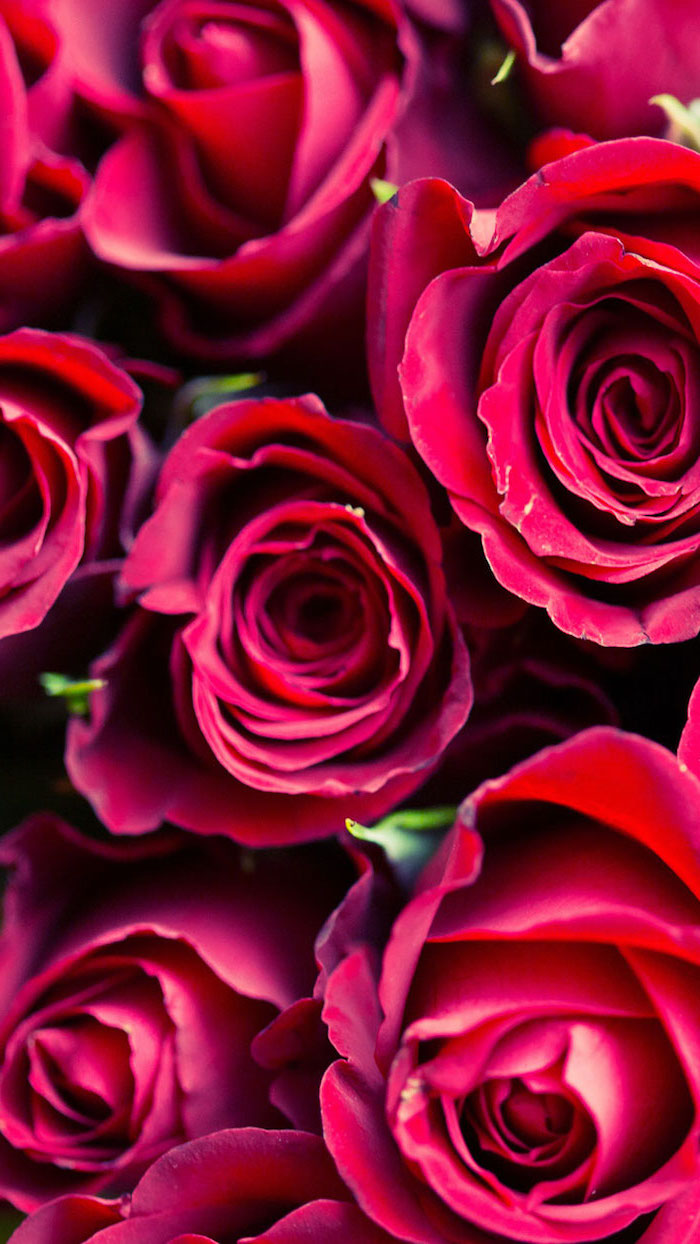 close up photo of bouquet of red roses why do we celebrate valentine's day