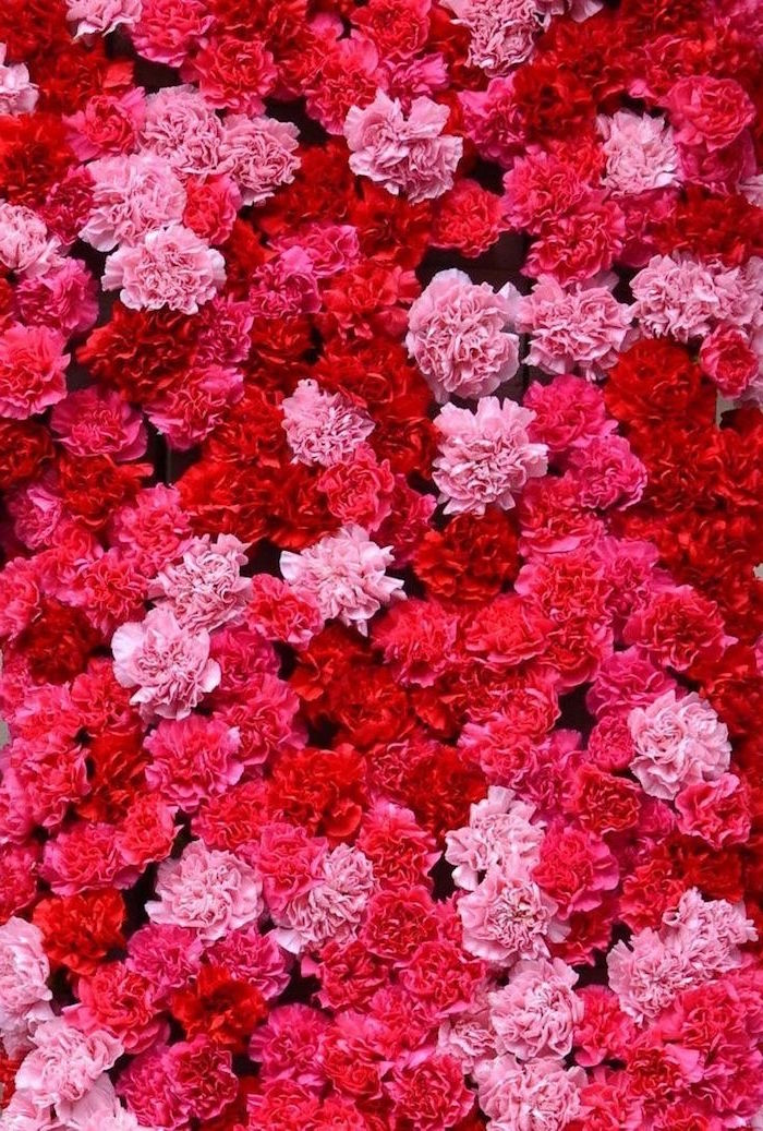 lots of peony flowers in different shades of pink and red valentines wallpaper close up photo