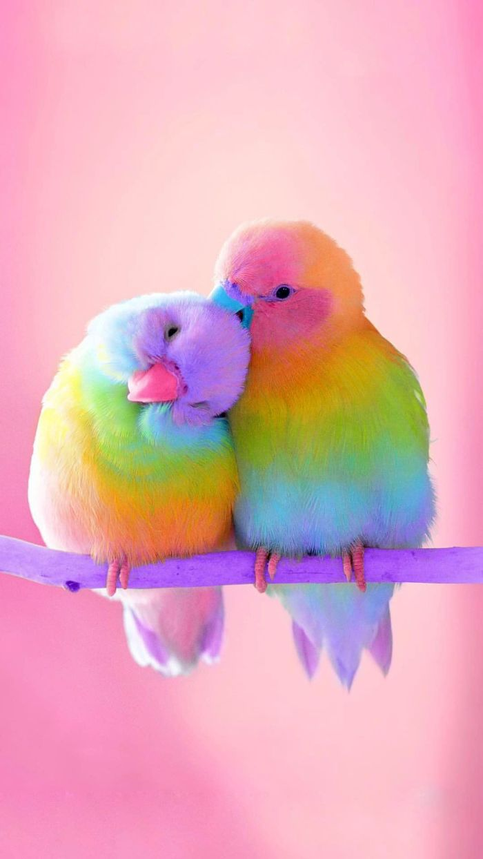 birds sitting on a tree branch feathers in the colors of the rainbow rainbow color wallpaper pink background