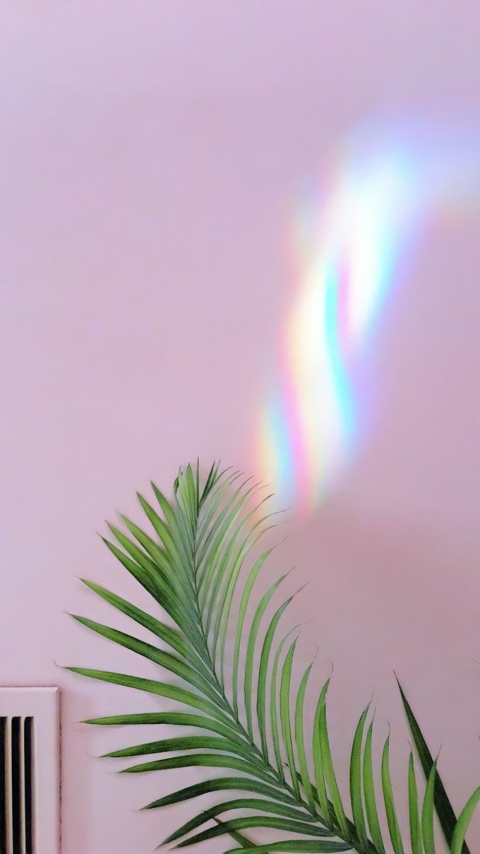 close up photo of palm tree leaf on pink background cool rainbow wallpapers rainbow in the background