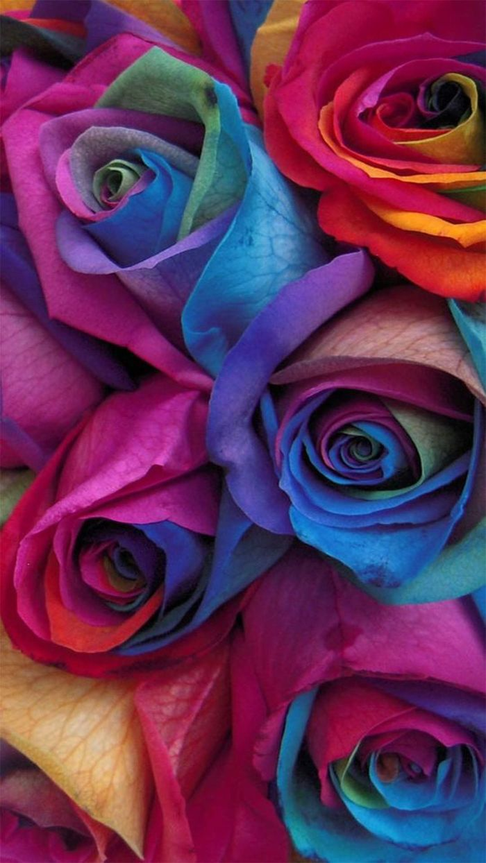 cute colorful wallpaper close up photo of bouquet of roses in different colors blue purple pink orange