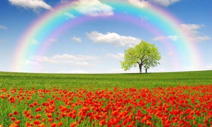 photo of green field with red tulips tree in the background boho rainbow wallpaper rainbow in the sky
