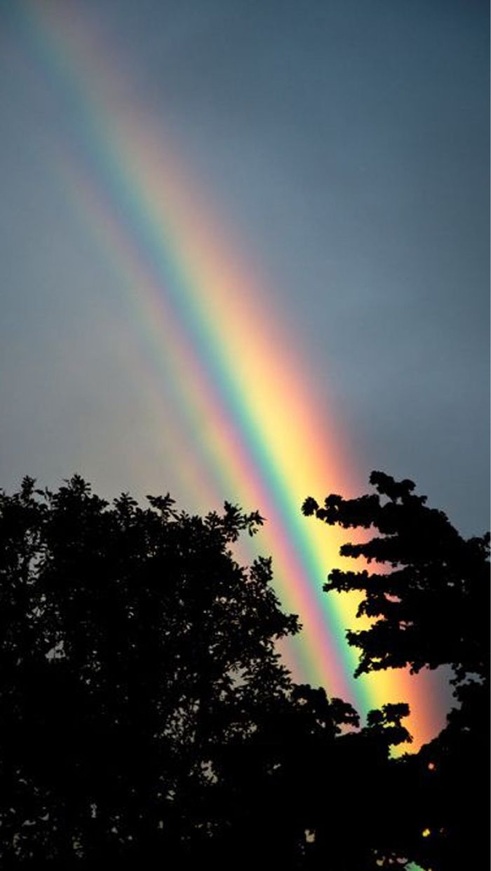 rainbow color wallpaper photo of dark sky before sunset tall trees two rainbows in the sky