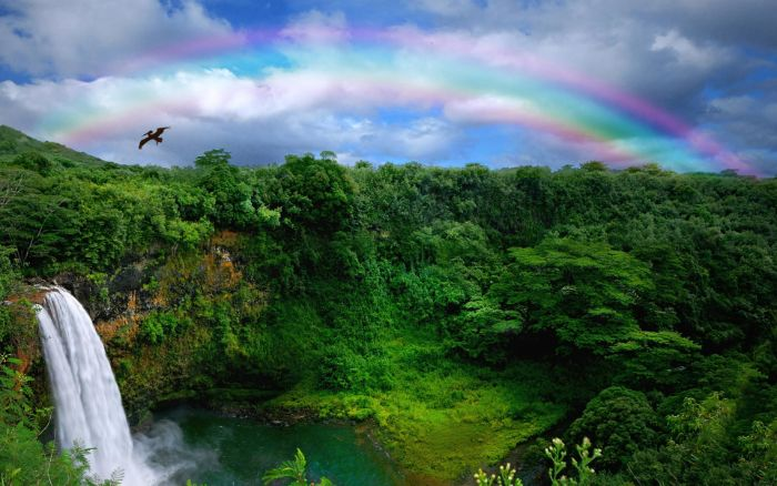 rainbow wallpaper photo of a forest landscape with lots of trees waterfall rainbow in the sky