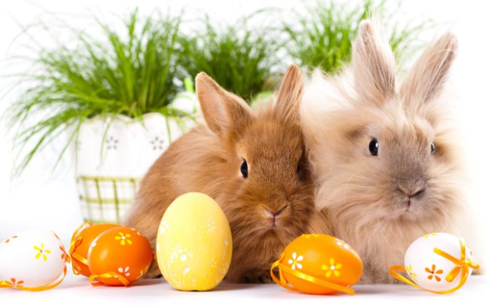 bunnies standing on white surface easter wallpaper yellow orange and white easter eggs around them