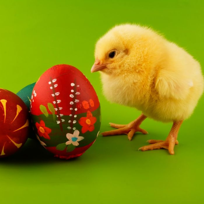 easter egg designs little chicken standing next to colored eggs with flowers drawn on them on green background