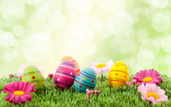 easter eggs in green pink orange blue yellow easter background placed on grass
