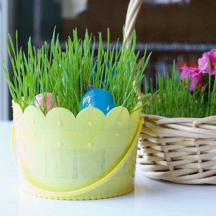 green grass grown inside plastic basket easter basket ideas plastic easter eggs inside
