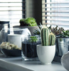 lots of potted plants and succulents placed on white cabinet ideas to use in your interior