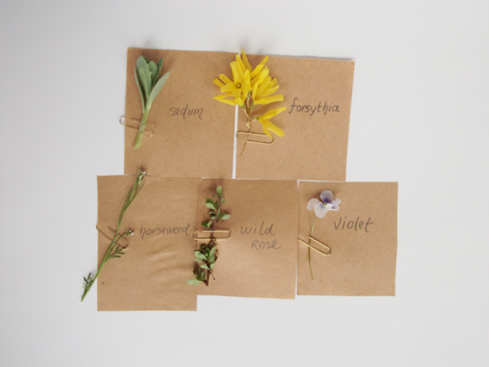 names of the different flowers used for diy easter crafts white background