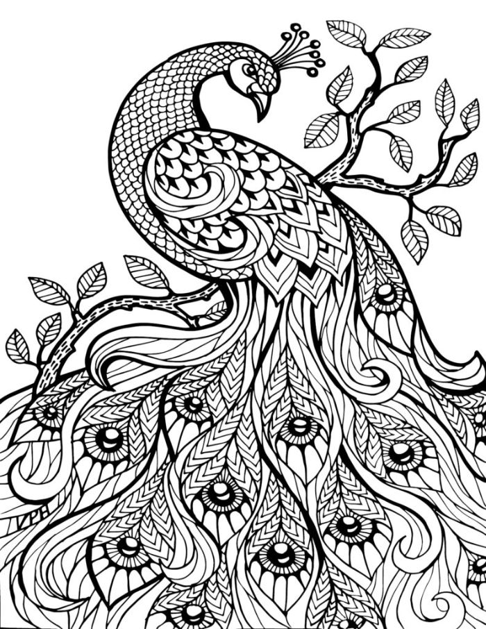 peacock with interesting patterns printable full size coloring pages for kids black and white drawing