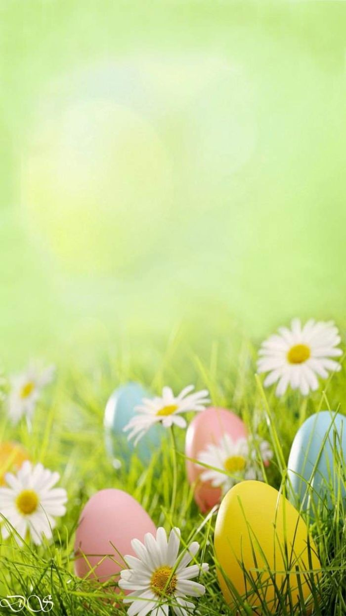 white daisies and eggs in yellow pink blue on the grass free easter wallpaper