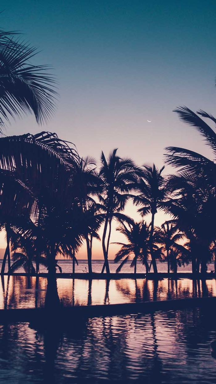 cute summer wallpapers tall palm trees photographed at sunset next to the ocean and pool