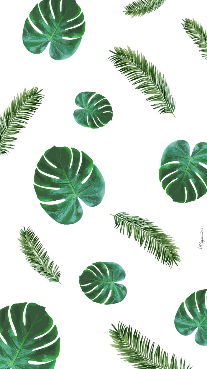 green palm tree leaves drawn on white background beach aesthetic wallpaper
